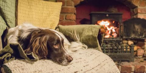 Why You Shouldn't Halt Your Pet's Heartworm Medication During Winter Months, Perry, Georgia