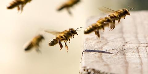 How Bees & Wasps Damage Your Home, Oshkosh, Wisconsin