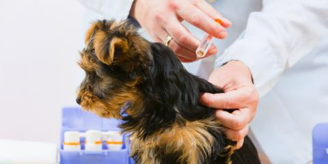 Wisconsin Veterinarian Shares Important Vaccinations Your Pet Needs, Prairie du Chien, Wisconsin