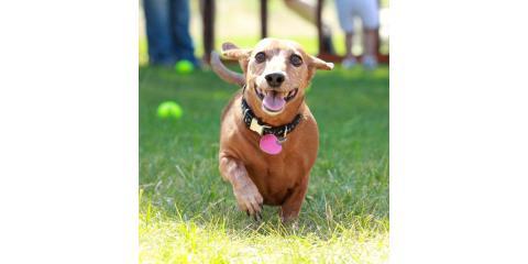 Wiener Dog Races at Wienerfest - Saturday, May 6th - Octoberfest Grounds!  Sponsored by Pet Me Scratch Me!, Onalaska, Wisconsin