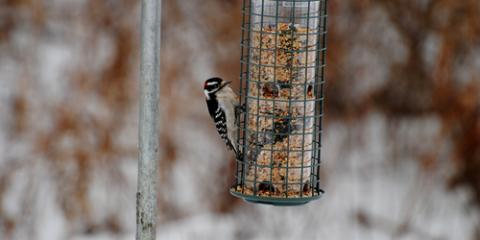 3 Tips to Prepare for Spring Bird Feeding, Bethel, Ohio