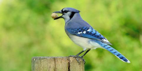 3 Tips for Attracting Birds to Your Birdhouse, Bethel, Ohio