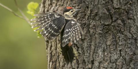 A Homeowner's Guide to Woodpecker Damage, Northeast Cobb, Georgia