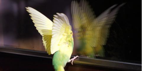 Why Do Birds Fly Into Glass?, Northeast Cobb, Georgia