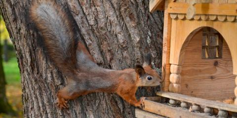 3 Places Wildlife Could Use to Enter Your Home, New Milford, Connecticut