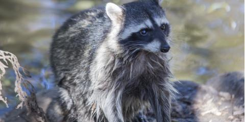 Rodent & Wildlife Removal: 5 Reasons to Always Trust a Professional, Amelia, Ohio
