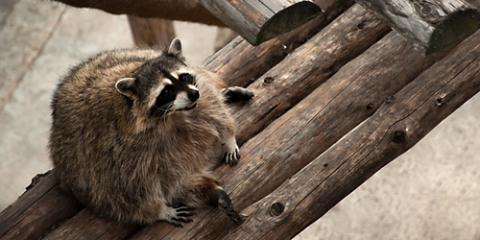 How to Determine When You Need to Call a Wildlife Removal Service, Springfield, Ohio
