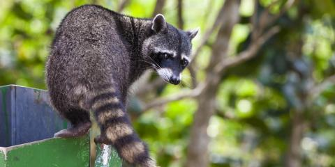 3 Signs You Need Wildlife Removal Services, Springfield, Ohio