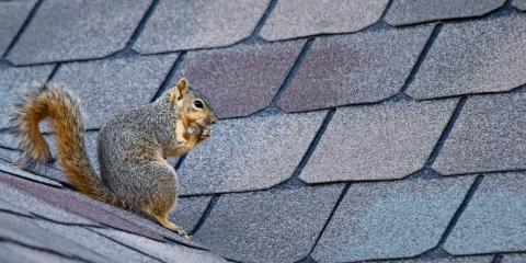 3 Misconceptions About Wildlife Removal, New Milford, Connecticut