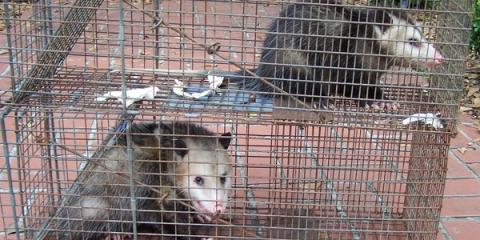 3 Reasons to Hire Local for Wildlife Removal Service, Daleville, Alabama