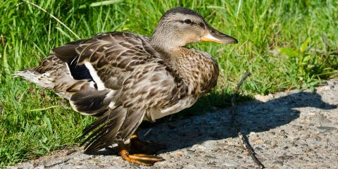 3 Tips to Care for a Wounded Bird, Miami, Ohio