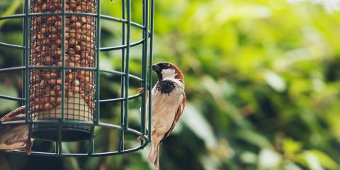 3 Reasons to Reconsider Your Bird Feeder, Miami, Ohio
