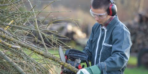 3 Benefits of Bringing in a Professional Landscaper to Trim Your Trees , Hamilton, Ohio