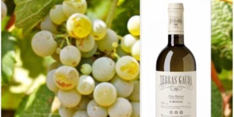 Wine Talk--May and June Wine Special at NYC's Premier French Restaurant, Manhattan, New York
