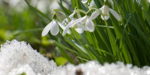 Topsoil, Mulch, & More: Top Five Tips to Help Gardeners Make the Most of Winter, Victor, New York