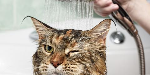 Cats & Water: It's Complicated, Wisconsin Dells, Wisconsin