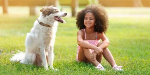 5 Tips to Housetrain a Puppy, Grand Rapids, Wisconsin