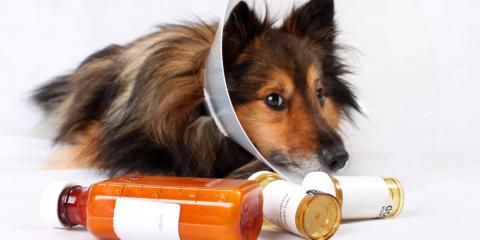 Cone of Shame Alternatives: 3 Suggestions From a Wisconsin Pet Clinic, Wisconsin Rapids, Wisconsin