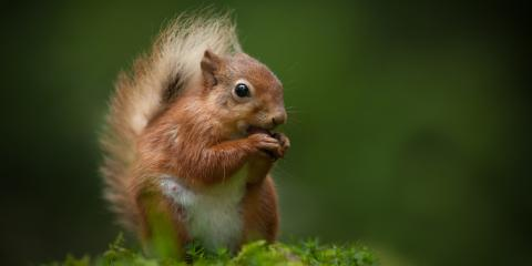 Do Squirrel Infestations Put Your Health at Risk?, Grand Rapids, Wisconsin
