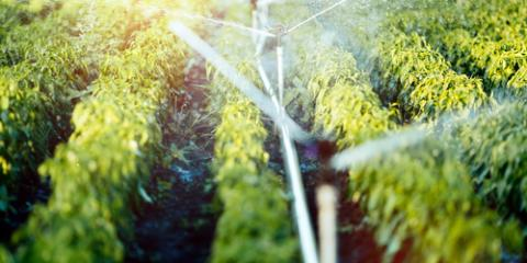 Pros & Cons of Drip & Spray Irrigation Methods, Ewa, Hawaii
