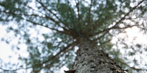 3 Autumn Tree Care Tips, Harrison, Ohio