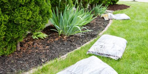 how to choose the best mulch for your unique landscape gi shavings