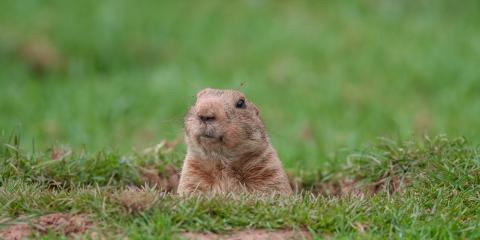 3 Facts Homeowners Should Understand About Woodchucks, New Milford, Connecticut