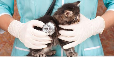 How Often Should You Take Your Pet to the Animal Clinic? , Waynesboro, Virginia