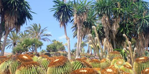 Xeriscaping Do's & Don'ts, Koolaupoko, Hawaii
