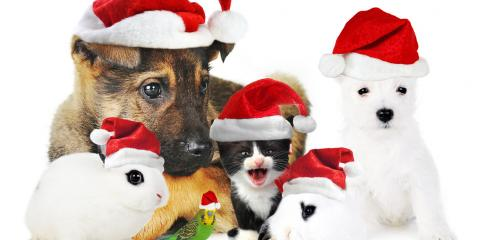 Holiday sale at sierra fish pets renton for Sierra fish and pets