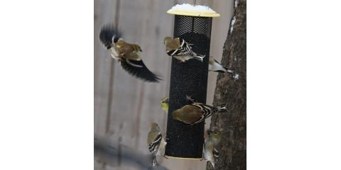 A Guide on Winter Bird Feeding, Lincoln, Nebraska