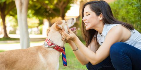4 Signs Your Dog Has Vision Problems, Lincoln, Nebraska