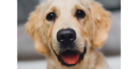 Cincinnati's Best Animal Hospital Encourages Yearly Pet Wellness Exams, Springfield, Ohio