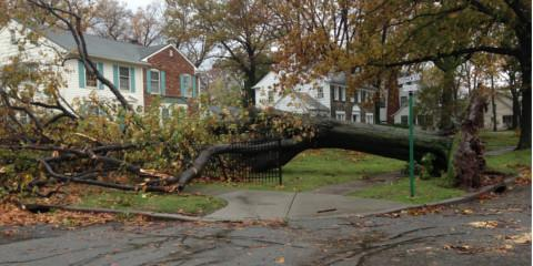 3 Steps to Take When a Tree Lands on Your House, York, South Carolina