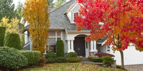 3 Fall Tree Care Tips, York, South Carolina