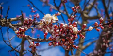 Corrective Tree Pruning Tips Explained by Childers Tree Service, York, South Carolina