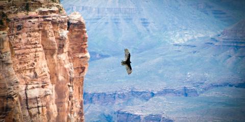 5 Wild Animals You Might Spot at the Grand Canyon, Laughlin, Nevada