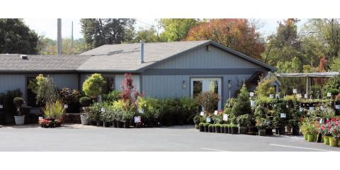 Glynn Young's Landscaping & Nursery Center, Landscaping, Services, Nicholasville, Kentucky