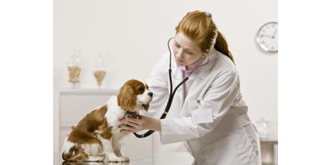 Cedarknoll Animal Hospital, Veterinarians, Health and Beauty, Montgomery, New York