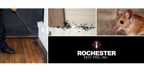 Winter Pest Control for Rochester, ,