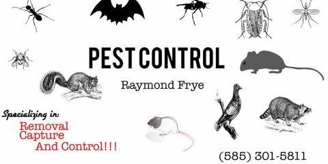 Ray's Property Maintenance & Pest Control, Pest Control, Services, Rochester, New York
